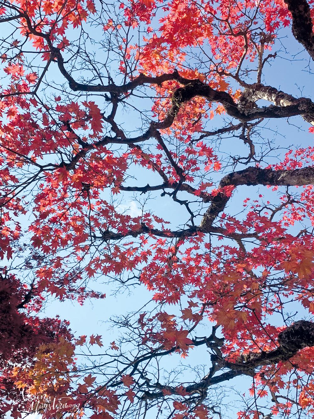 nach-Japan-reisen_tokio_laubfaerbung_verenamuenstermann